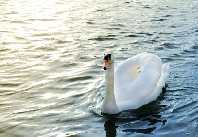 Avian flu: Update for Dorset