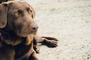 Dorset-wide Consultation on Dogs in Public Spaces Proposed