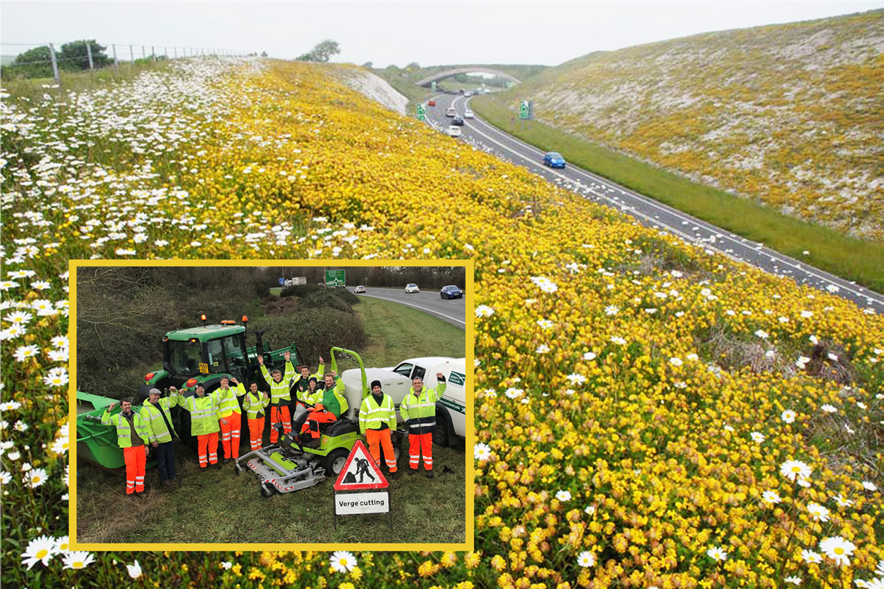 Greenspace Team wins national award for 'innovative' verge management