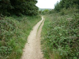 Sustainable transport and wildlife conservation in Bridport