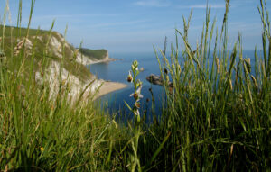 Dorset Council publishes Climate and Ecological Emergency Action Plan ahead of Cabinet meeting